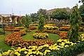 Spring Flower in IBA Sukkur.jpg