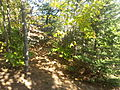 Srubby vegetation near bluff trail.jpg