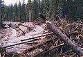 St Göljaån, 200 m uppströms vägen. 20-30 m höga granar som plockepinn.jpg