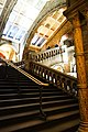 Stairs at the London Museum of Natural History (38633949690).jpg