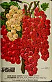 Stark fruits (1896) (20544707725).jpg