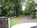 Starr-120606-6789-Artocarpus altilis-habit and drive-Kahanu Garden NTBG Hana-Maui (24517485823).jpg