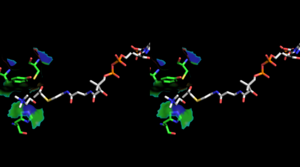 Choline acetyltransferase - Image: Stereoscopic depiction of choline and acetyl Co A bound in Ch AT active site alternate angle