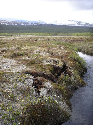 Palsa - The Storflaket peat bog near Abisko in northern Sweden is a permafrost plateau. It shows some signs of collapse such as cracks at its borders