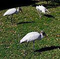 Storks x 3.jpg