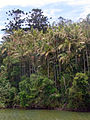Stotts Island rainforest.JPG