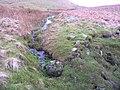 Stream draining Black Pasture - geograph.org.uk - 668327.jpg