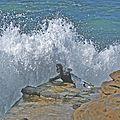 Surf IMG 0594-1 (3119243542).jpg