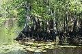 Suwannee Canal (38695414392).jpg