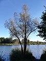 Swarzedzkie Lake (Swarzedz lake) (7).jpg