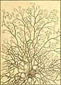 Tableau encyclopédique et méthodique des trois règnes de la nature (1791) (14581547888).jpg