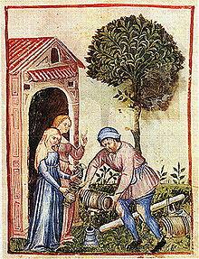 L'uso nella farmacopea medioevale dell'olio d'oliva (da Tacuinum Sanitatis)