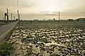 Taiwan 2009 Tainan City Water Caltrop Field FRD 7922.jpg