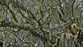 Tamarind Moss Forest near Les Makes 1 (31439163111).jpg