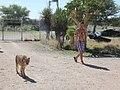 Tamme cheetahs.. (6521890553).jpg