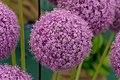 Tatton Park Flower Show 2014 057.jpg