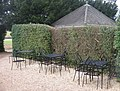 Tea Garden Seats - geograph.org.uk - 1182197.jpg