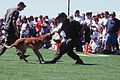 Technical Sergeant John Gehringer is attacked by a military working dog protecting Staff Sergeant Kurt Killian F-3304-SPT-95-000030-xx-0181.jpg
