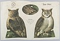 Textile, The Owl, 1892 (CH 18452179).jpg