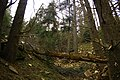 Tha 3ouinath oubizam . montagne thichaw (park national belezma).jpg