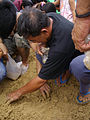 Thai Royal Ploughing Ceremony 2009 - rice finding 2.jpg