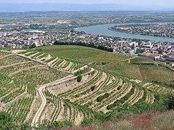 Vue de la vallée du Rhône du haut du vignoble de Tain-l'Hermitage.