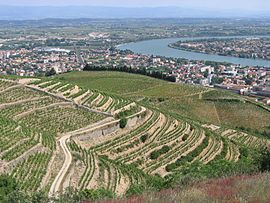 Tain-l'Hermitage and its vineyards