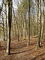 The Beeches, Betty Mundy's Bottom - geograph.org.uk - 391490.jpg