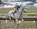 The Friendly Ghost race horse.JPG