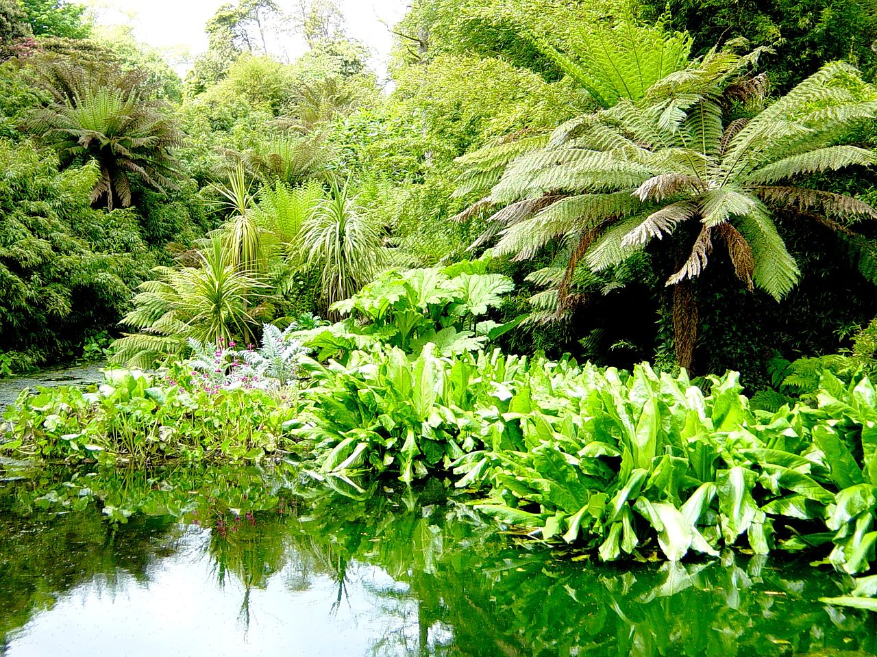 The lost gardens of heligan in cornwall - File The Jungle The Last Gardens Of Heligan Jpg