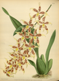 The Orchid Album-02-0114-0085.png