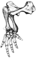 The Osteology of the Reptiles p165 Fig-134.png