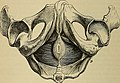 The anatomist's vade mecum - a system of human anatomy (1851) (14778701532).jpg