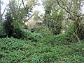 Through the trees - geograph.org.uk - 1049505.jpg