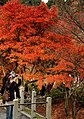 Tofuku-ji (4585781906).jpg