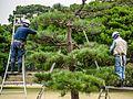 Tokyo-gardeners-1160.jpg
