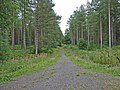Track through Newborough Forest - geograph.org.uk - 226530.jpg
