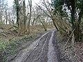Track through the wood - geograph.org.uk - 1802780.jpg