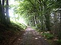 Track through woodland to Clachanshiels - geograph.org.uk - 1377235.jpg