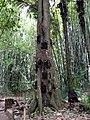 Tree Burial, Tana Toraja 1442.jpg