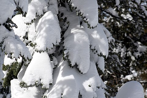 https://upload.wikimedia.org/wikipedia/commons/thumb/a/ac/Tree_covered_with_snow.jpg/480px-Tree_covered_with_snow.jpg