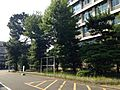 Trees in Hakozaki Campus, Kyushu University 20150805.JPG