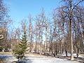 Trees in Memorial park 07.JPG