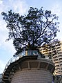 Tsim Sha Tsui, Hong Kong - panoramio (11).jpg