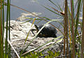 Turtle near the Blue Hole.jpg