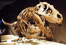 Tyrannosaurus wikipedia arms altavistaventures Gallery