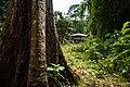 USAID Measuring Impact Conservation Enterprise Retrospective (Philippines; Nagkakaisang Tribu ng Palawan) (25422061217).jpg