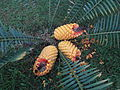 Unbekannte Pflanze auf Madeira.JPG