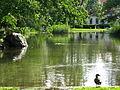 Uster - Stadtpark IMG 3557.jpg
