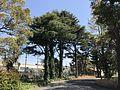 View in Hakozaki Campus of Kyushu University 20170403-2.jpg